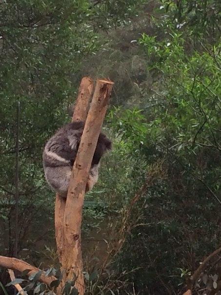 Koala3_EatTravelMeet